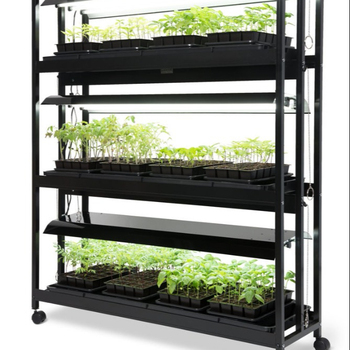 Indoor Microgreen Growing Seedling Hydroponic System With