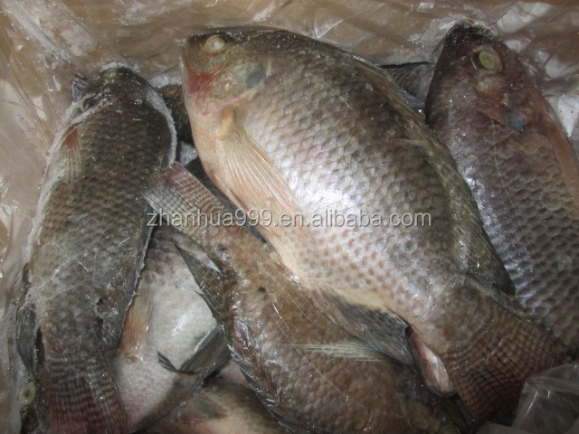 Frozen Golden Tilapia Tilapia Wholesale Price Frozen Tilapia Fish ...