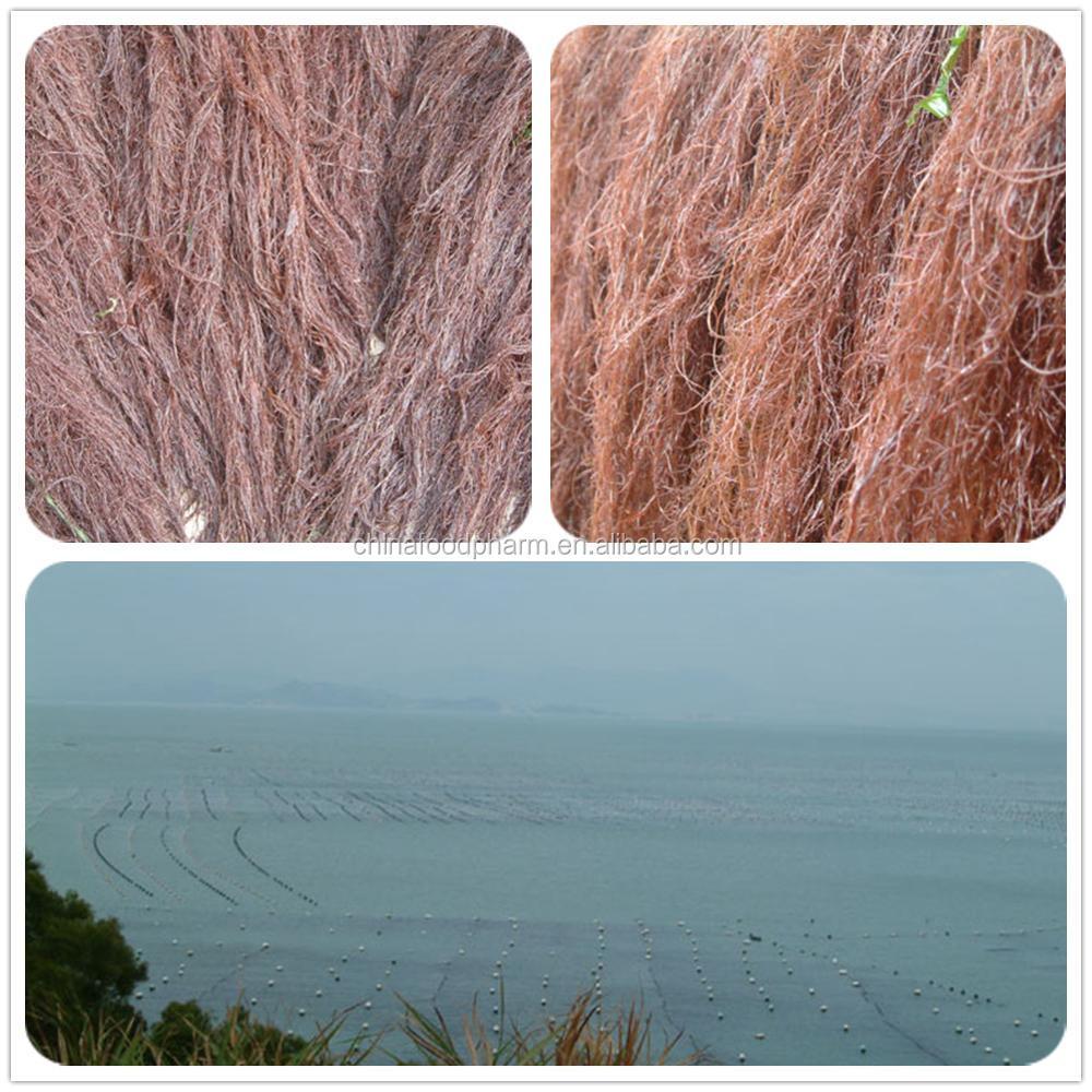 Extrato Da alga Agar Agar com Fornecimento de Fábrica