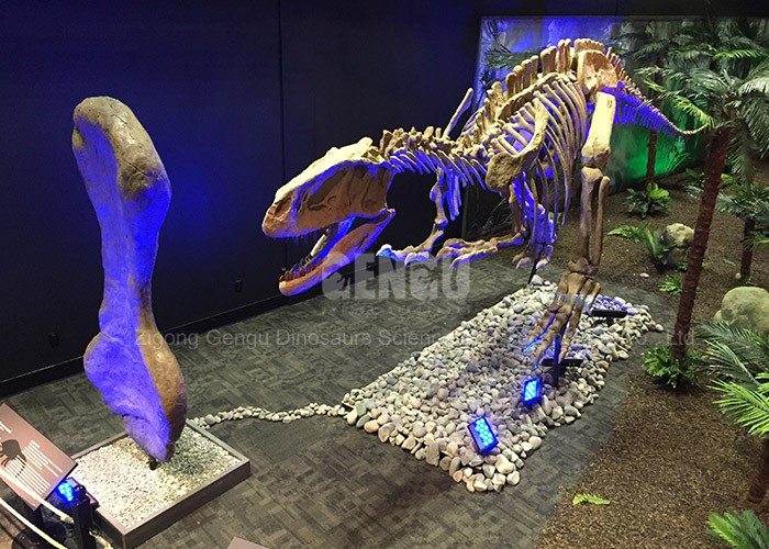 Indoor Playground Artificial Life-size Dinosaur Skeleton Replicas