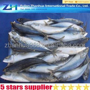 Mariscos congelados pac fico caballa pescado saba buy for Pacifico fish company