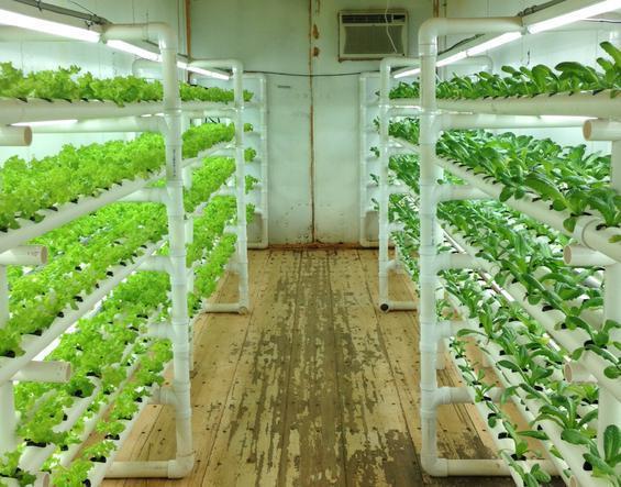 4ft T8 Led Tube Grow Light For Vertical Farm 20w Led Tube