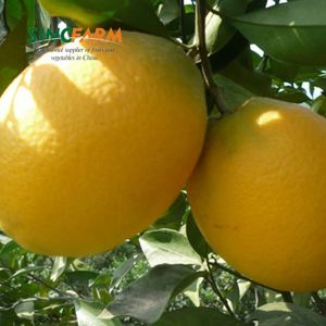 Fresh valencia citrus cheap orange