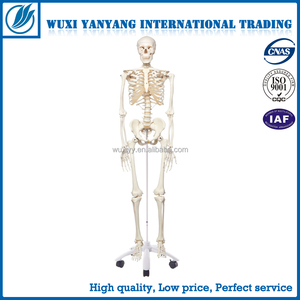 170cm Model, 170cm Model Suppliers and Manufacturers at