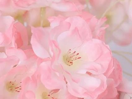 Goede prijs kwaliteit indoor kersenbloesem boom Met Service