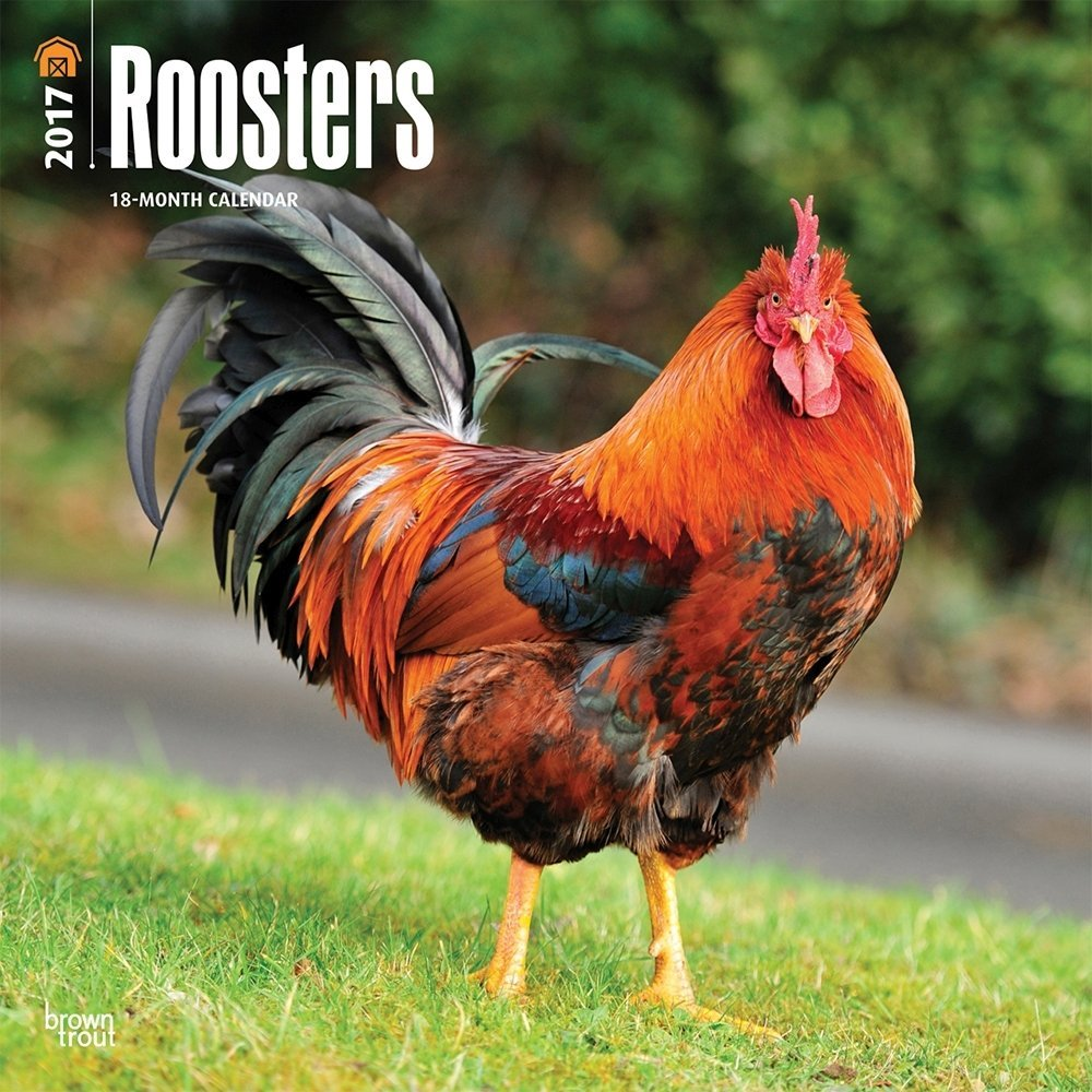 Roosters Calendar 2017 Deluxe Rooster Wall Calendar (12x12)