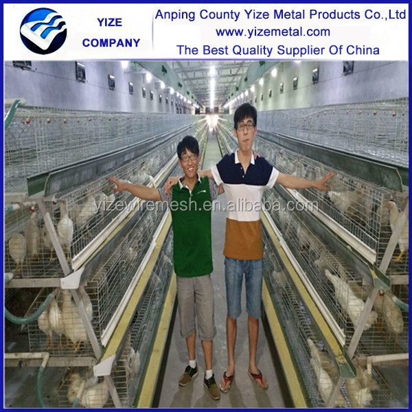 China manufacturer eggs laying cages for poultry /types of laying hens/nests for chickens made in china