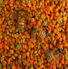 Best quality mixed pollen for bee farming---exported to 12 countries