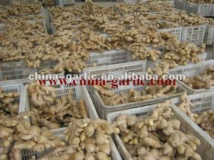 Old Ginger Price For Germany/UK Market