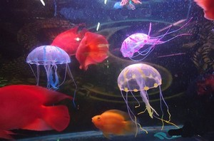 jellyfish jellyfish aquarium inflatable jellyfish