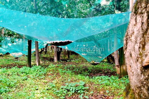Economic and Reliable Free Air UV Resistant Agricultural Olive Net Scaffolding Net