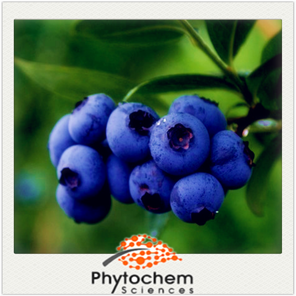 Chinese Natural fruit best quality Bilberry Extract with 25% Anthocyanidins