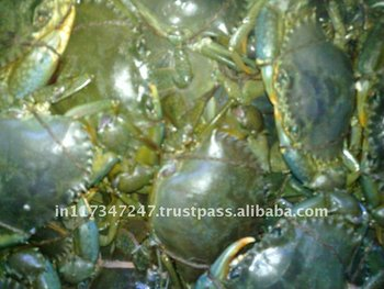 Live Green Mud Crabs - Buy Live Green Mud Crabs,Live Mud Crab Sizes,Mud  Crab For Sale Product on Alibaba com