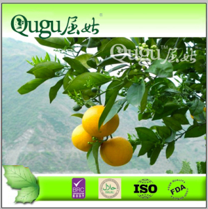 new season good taste fresh Navel Orange, fresh orange, China orange,