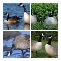 Canada Goose kensington parka online discounts - Canada Goose China, Canada Goose China Suppliers and Manufacturers ...