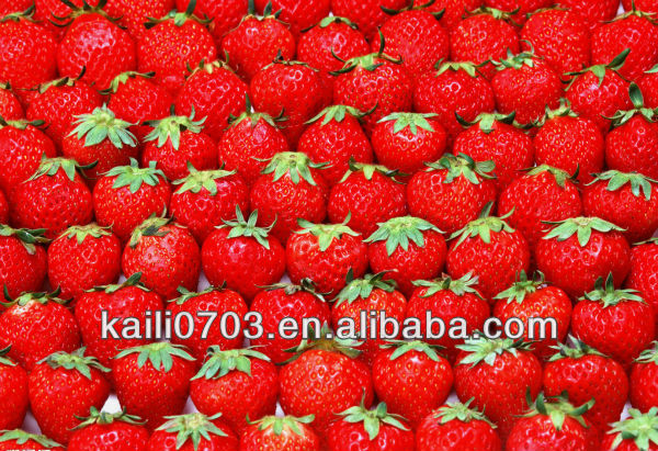 Hot sale sweet fresh strawberry in dandong with fruits wholesale