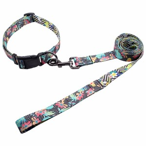 China wholesale customized fashion paper dog collar and leash