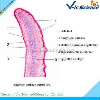 Educational Student Histology Microscope Prepared Slides ...