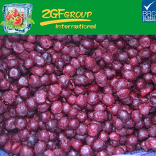 IQF frozen pitted sour cherry