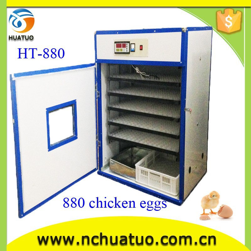 most used products ostrich chicks incubator and eggs fresh fertile for sale On promption