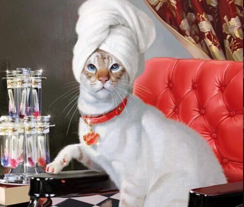 fashionable tube packing for pet shop cat nail cap nail