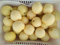 new product fresh pear/fresh persimmon fruits for sale