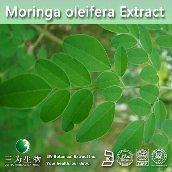 Moringa Oleifera Leaf Powder,Moringa Oleifera Leaf Powder For ...
