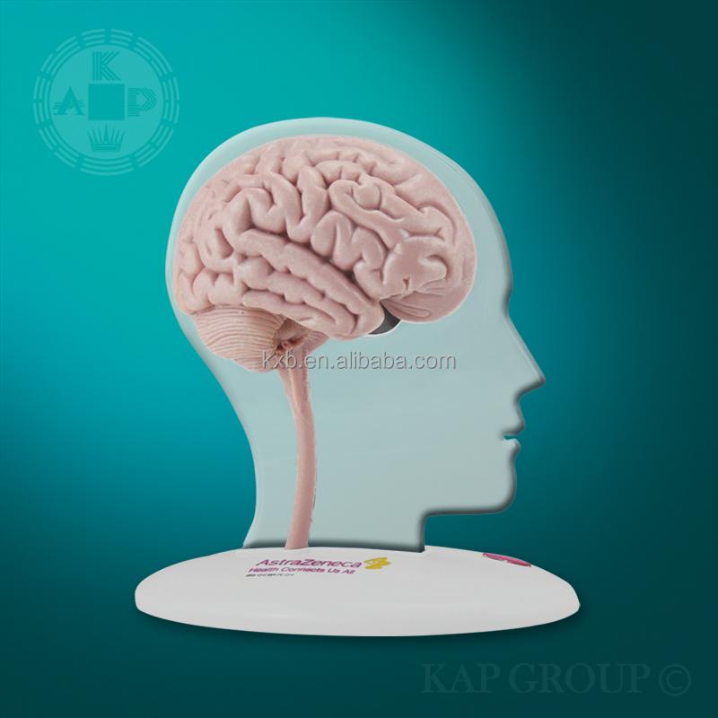 Led Human Brain Display,Medical Brain Anatomical Model - Buy Brian ...