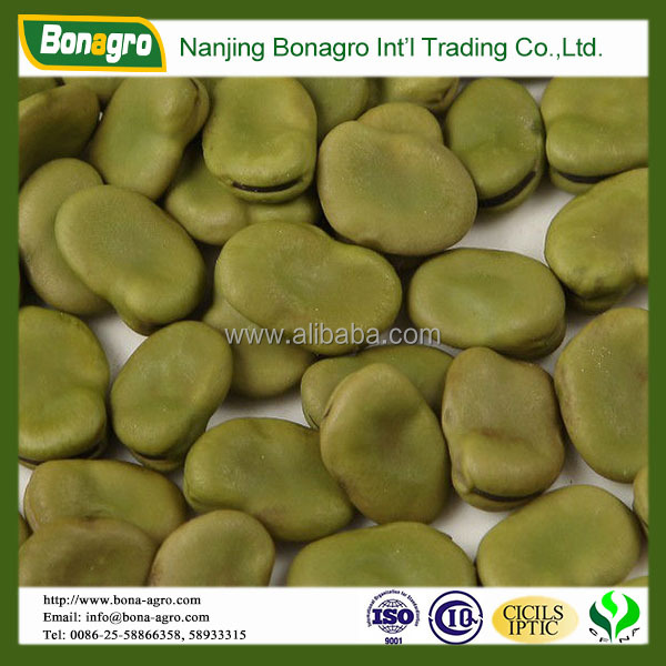 broad bean green color