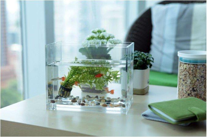 Salontafel aquarium mini aquarium aquaria en accessoires product ID 60136235864 dutch alibaba com