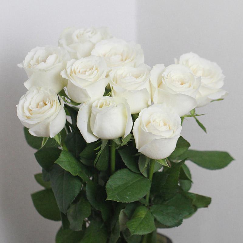 Großhandel Weiße Rosen Für Verkauf. Rose,Tanike - Buy Product on ...