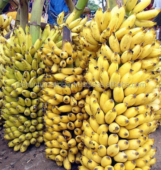 Best indian Banana