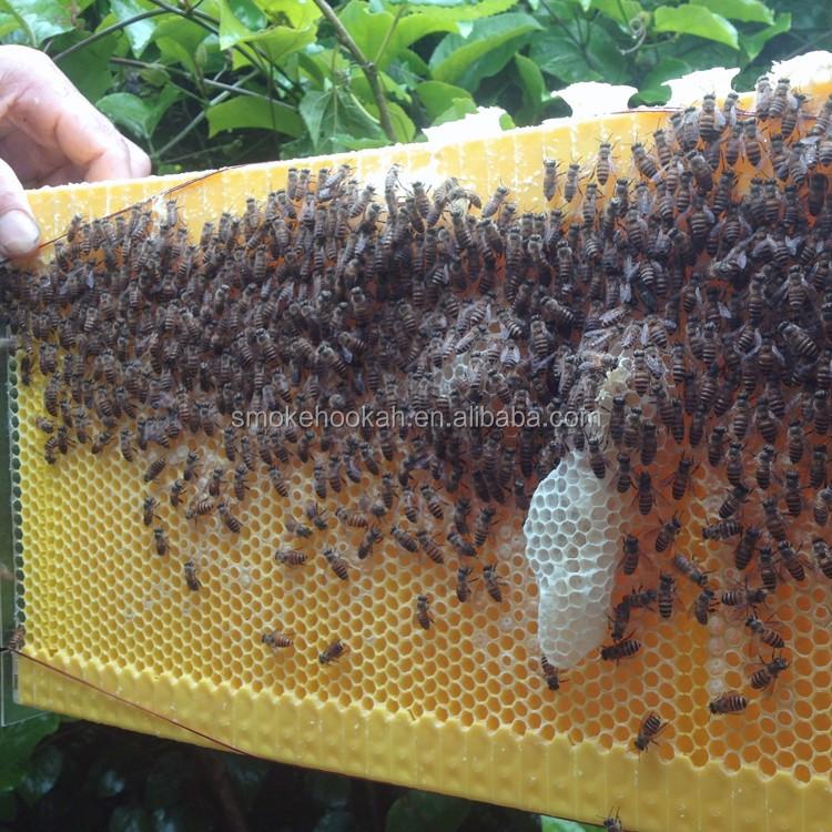 Automatische 6 Rahmen Langstroth Bee Fluss Bienenstock Und Super ...