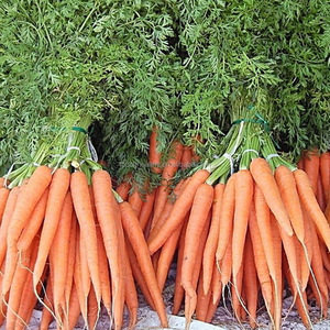 Touchhealthy supply Can have a better harvest carrot seeds price