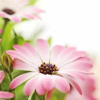 Popüler Büyük Basit Tek çiçek Boyamaçiçek Kabartma Resim Buy