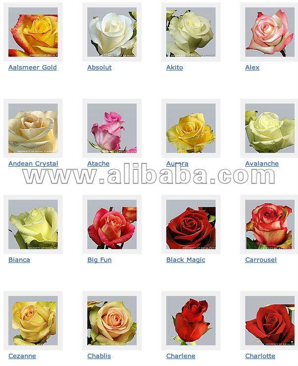 каталог сортов роз с картинками флористика можно изготовить атласных