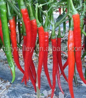 Red Hot Pepper Seeds For Growing Good Price And Excellent Quality ...