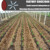 Diameter 16mm Thickness 8 mil Dripper spacing 500mm Drip irrigation pipe