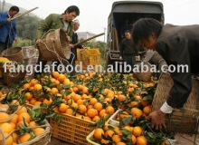 sell navel orange/low price navel orange