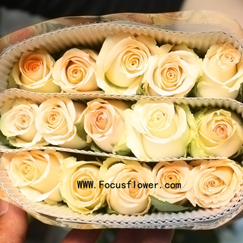 Wholesale Price High Quality Roses Flowers Alibaba Kenya Preserved ...