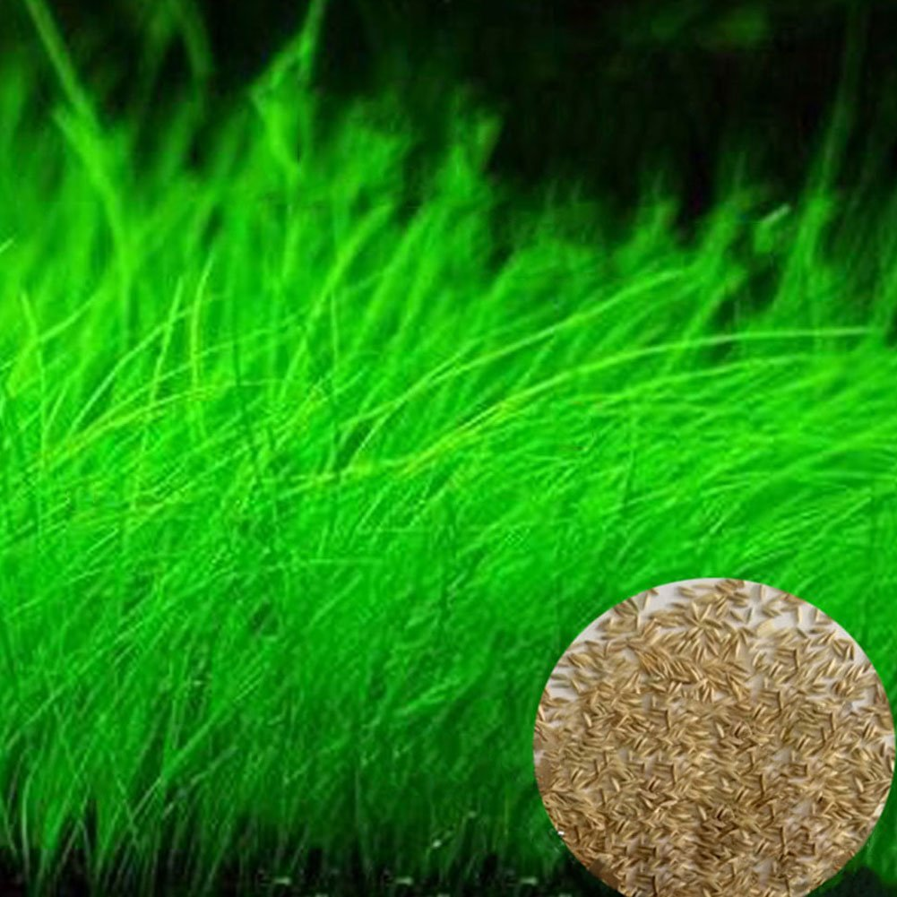 Cheap Easy Grow Grass Seed Find Easy Grow Grass Seed Deals On Line