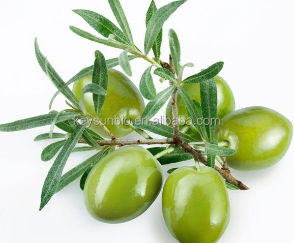 olive leaf extract,100% Factory Supply Organic Olive Leaf Extract and Olive Leaf Powder