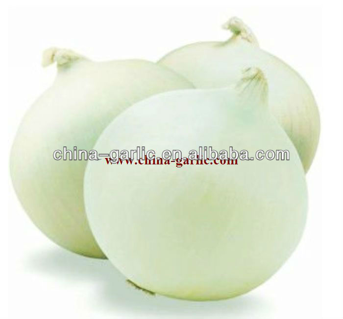 Fresh Onion/Market Onions Prices In Retail Packing For Netherlands