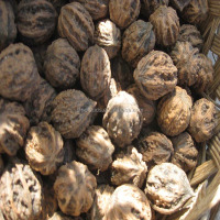 He tao zhong zi Health Food Walnut Seed with Nuts And Dried Fruits