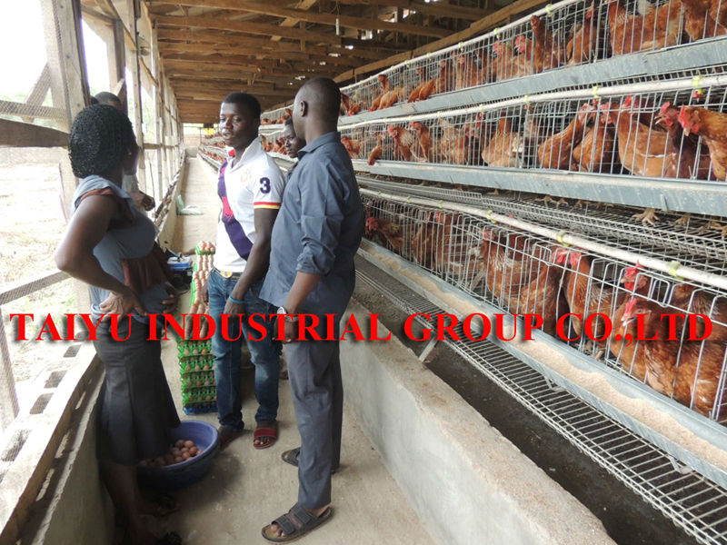 taiyu low disease and death rate poultry house design for layers in