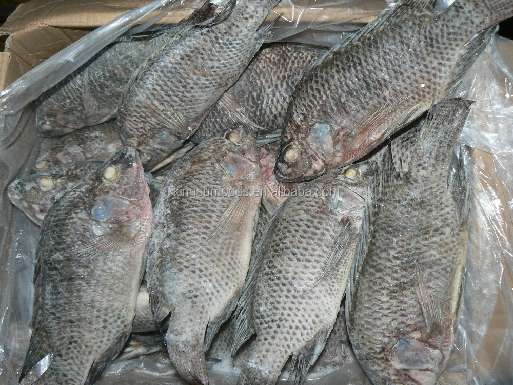 Fresh Frozen Tilapia Gutted Scale Off 350-550G