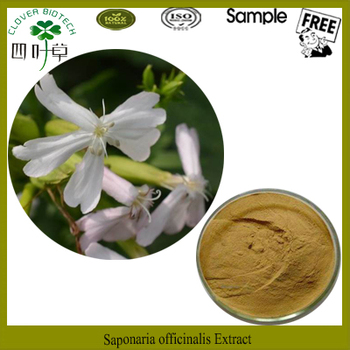 100% pure Saponaria Officinalis Powder,Saponaria Officinalis Root Extract,Saponaria Extract 5:1 10:1