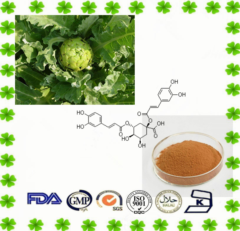 Natural Organic Artichoke P.E. powder with best quality