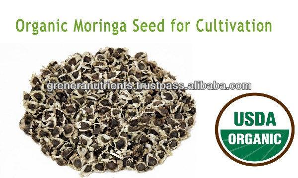 Organic Moringa Seed whatsapp +91 9585533649