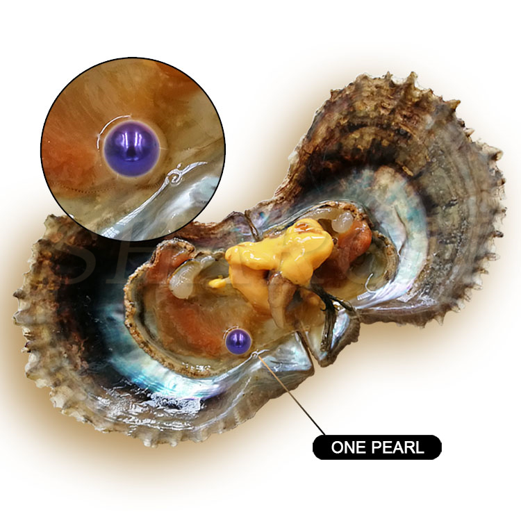 Surprise Gift DIY Wholesale Vacuum-packed 6-7mm Bright Purple Saltwater Round Akoya Pearl Oyster